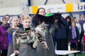 Выставка кошек FiFe 3-4 мая 2014 Эстония г.Таллин